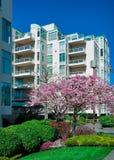 Modern huis in de stad met bloeiende kers vooraan. stock fotografie