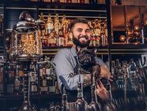De modieuze brutale barman in een overhemd en een schort houdt volbloed- zwarte pug bij bar tegenachtergrond stock afbeelding