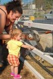 De moeder en de dochter voeden de schapen Royalty-vrije Stock Afbeelding