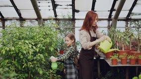 De moeder en de dochter werken in broeikas het water geven installaties samen gebruikend nevel-fles en water geven-pot Familie stock video