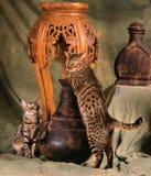 De moeder van Bengalen met haar katje Stock Foto