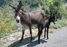 De moeder van de ezel met zijn baby Stock Foto's