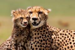 De Moeder van de jachtluipaard met welp, Masai Mara Royalty-vrije Stock Afbeeldingen