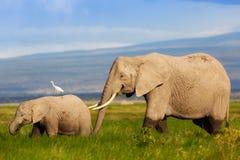 De moeder van de olifant met kalf Royalty-vrije Stock Afbeeldingen