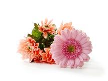 De Moederdag bloeit II Stock Afbeelding