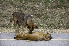 De moederhond maakt het puppy schoon liggend op de weg stock foto