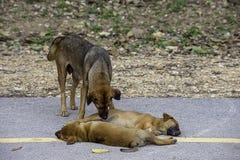 De moederhond maakt het puppy schoon liggend op de weg stock afbeeldingen