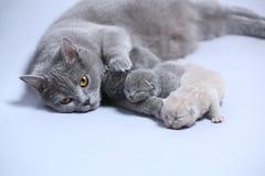 De moederkat behandelt haar katjes royalty-vrije stock foto
