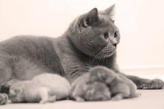 De moederkat behandelt haar katjes, eerste dag stock afbeelding