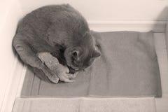 De moederkat behandelt haar katjes, eerste dag royalty-vrije stock foto's