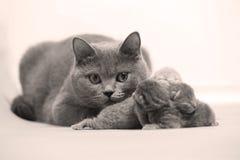 De moederkat behandelt haar katjes, eerste dag royalty-vrije stock afbeeldingen