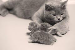 De moederkat behandelt haar katjes, eerste dag royalty-vrije stock afbeelding