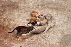 De moederkat voedt alle 4 katjes op de concrete vloer royalty-vrije stock fotografie