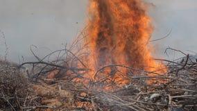De moedige brandweerlieden doven uitgebreide brand stock video