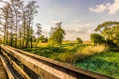De moerasbrug ziet royalty-vrije stock foto's