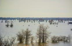 De Moerassen van Louisiane Stock Afbeeldingen