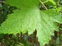 De moesson komt India aan Stock Afbeelding