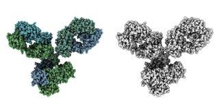 De molecule Immunoglobulin van G (IgG1, antilichaam) Stock Afbeeldingen