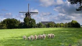 De molen van de wind in Nederland Stock Afbeelding