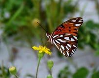 De Monarch en Th-Paardebloem Royalty-vrije Stock Foto's