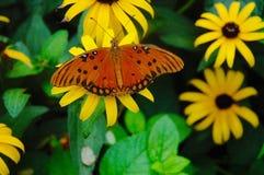 De Monarch van Wildseedlandbouwbedrijven stock afbeeldingen