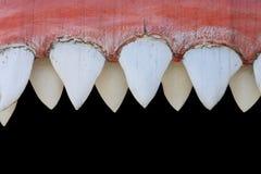 De mond van de haai Stock Foto's