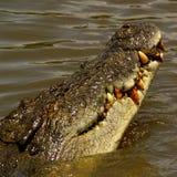 De Mond van de krokodil Royalty-vrije Stock Foto's