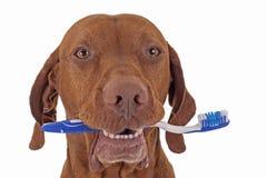 De mondelinge hygiëne van de hond stock afbeelding
