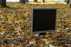 De monitor van de computer is op het de herfst gele gebladerte stock foto's