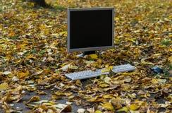 De monitor van de computer is op het de herfst gele gebladerte royalty-vrije stock afbeeldingen