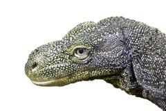 De monitor van de krokodil Stock Foto