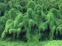 De Monsters van de boom Stock Afbeeldingen