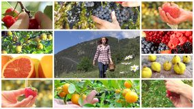 De montering van de fruitoogst stock videobeelden