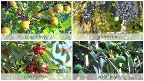 De montering van fruitbomen met oude stijlondertitels stock footage