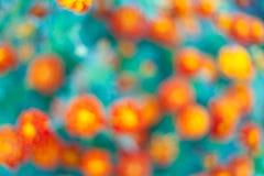 De mooie abstracte bloemenachtergrond met roze bloem ontluikt en defocused lichten Grensontwerp in roze en groen Stock Fotografie