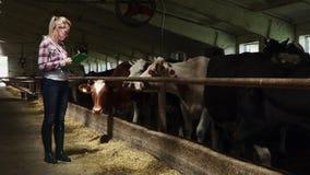 De mooie arbeider loopt dichtbij koeien bij het landbouwbedrijf stock video