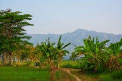 De mooie bergketen wordt gezien van het midden van groen padieveld royalty-vrije stock afbeeldingen