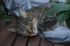 De mooie binnenlandse kat slaapt op een tuinlijst tegen een achtergrond van groene installaties en stoflaken royalty-vrije stock foto