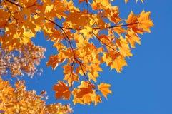 De mooie bladeren van de daling Royalty-vrije Stock Afbeeldingen