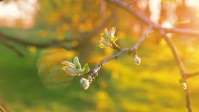 De mooie bladeren van de tijdtijdspanne bij zon backlight stock videobeelden