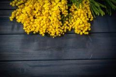 De mooie bloei van de mimosabloem op donkerblauwe houten achtergrond De kaartmalplaatje van de groet Ondiepe diepte De ruimte van Stock Foto's