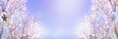De mooie bloeiende banner van amandelbomen stock fotografie
