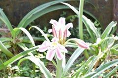 De mooie bloem royalty-vrije stock foto's