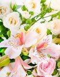 De mooie bloem is in de stralen van licht, blured Stock Fotografie