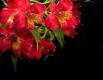De mooie bloem is in de stralen van licht, blured Royalty-vrije Stock Fotografie