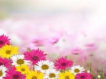 De mooie bloem is in de stralen van licht, blured en kleurde Stock Afbeeldingen