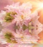 De mooie bloem is in de stralen van licht, blured en kleurde bezinning in water Royalty-vrije Stock Afbeeldingen
