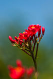De mooie bloemen Royalty-vrije Stock Afbeeldingen