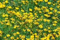 De mooie bloemen Stock Foto's