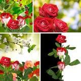 De mooie bloemen in de tuin sluiten omhoog Royalty-vrije Stock Afbeeldingen